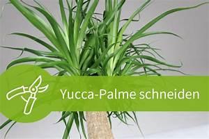 Kentia Palme Braune Blätter : garten palme schneiden ~ Watch28wear.com Haus und Dekorationen