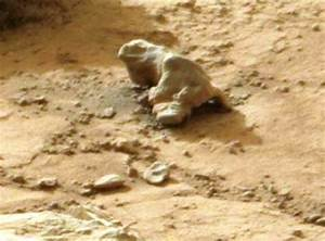 'Mars iguana' discovery fuels more speculation about life ...