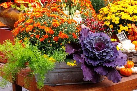 fall container wow   easy steps  garden glove