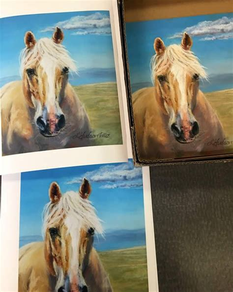 wild wyoming pryor center mustang lovell mountain horses