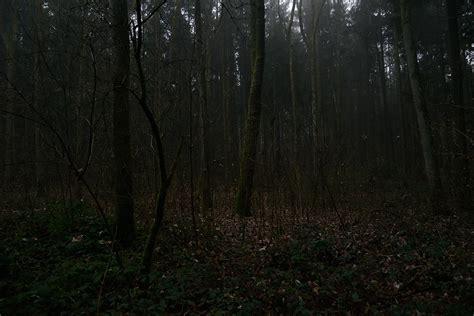 dunkel-wald – MARTIN ROSNER [· fotografie