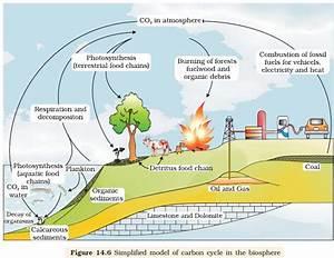 Ncert Class Xii Biology Chapter 14   Ecosystem