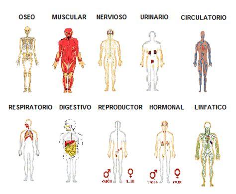 sistemas y aparatos cuerpo humano sistemas y aparatos