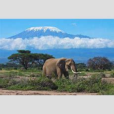 Mount Kilimanjaro National Park, Tanzania Kearsleys