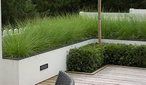 White rendered low garden wall grasses and box hedge o for White garden walls