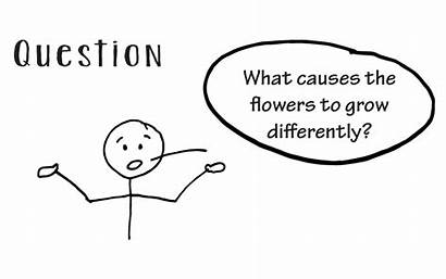 Scientific Method Question Step Worksheet Steps Ask