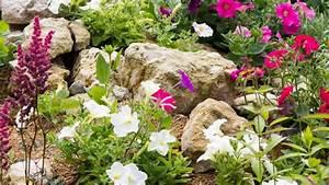 Steine Zum Bepflanzen : steingarten anlegen passende steine und steingartenpflanzen ~ Eleganceandgraceweddings.com Haus und Dekorationen