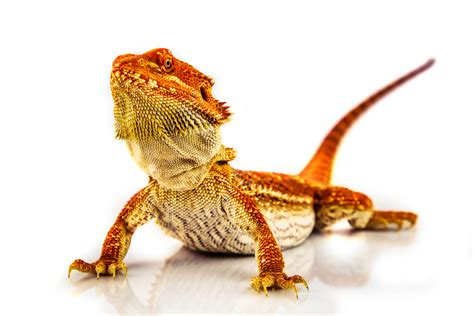 Types of Exotic Animals That Make Great Pets in Florida