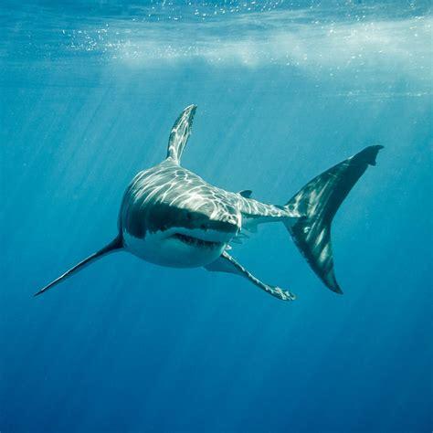 Shark Image Of Florida News