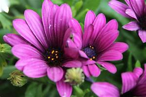 Pretty Purple Flowers!... by NicklasAndersen on DeviantArt