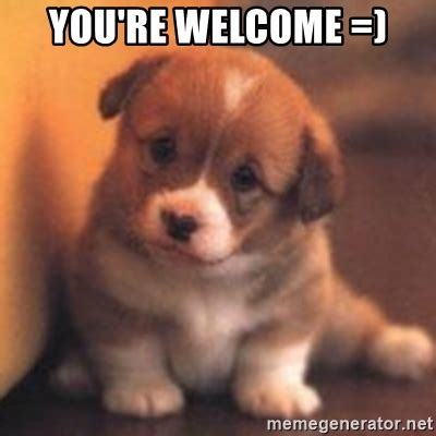 Your Welcome Meme - you re welcome cute puppy meme generator