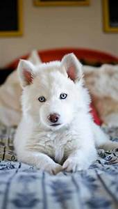 3571 best images about Truly Great Dog Photography on ...