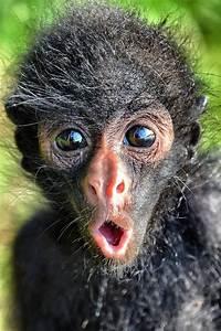 cutest spider monkey with expression luvbat