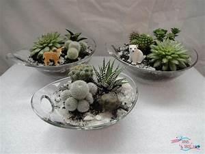 Succulentes Pas Cher : diy planter des cactus et des succulentes s ve d co ~ Melissatoandfro.com Idées de Décoration