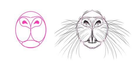 draw animals big rodents   anatomy