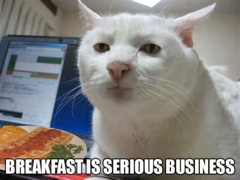 Breakfast Meme - breakfast cat meme