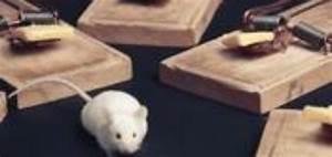 Piege A Rat Castorama : souris dans cloison taupier sur la france ~ Voncanada.com Idées de Décoration
