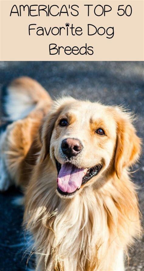americas top  favorite dog breeds dogvills