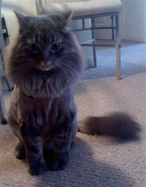 how much is a haircut at petsmart cat haircut cost haircuts models ideas