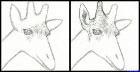 draw  giraffe head step  step safari animals