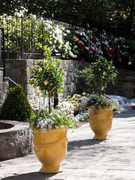 tuscan garden plants 1241 best images about borders pots container gardens on pinterest gardens topiaries