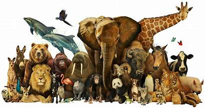 Dream Animals Animal