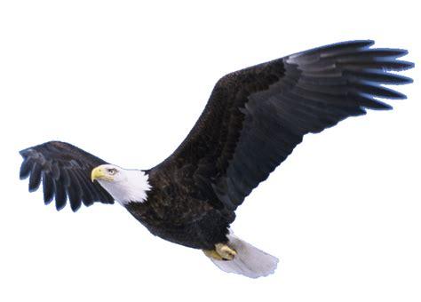 Eagle In Flight Wallpaper Soaring Eagle Png