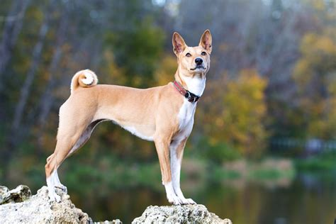 7 best hypoallergenic dogs choosing the right dog for