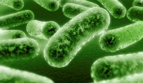 residential bacteria testing  evaluation