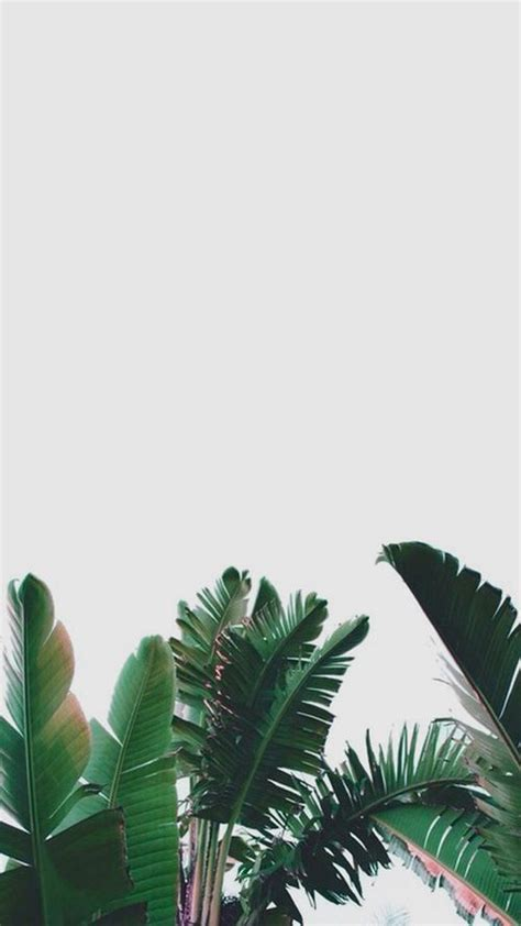 35 ide background daun hijau
