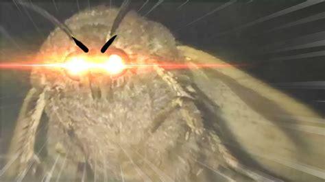 Moth Lamp Memes (asot)
