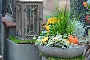 Kuebelpflanzen Winterhart Bluehend : herbst balkon winterhart raum und m beldesign inspiration ~ Whattoseeinmadrid.com Haus und Dekorationen