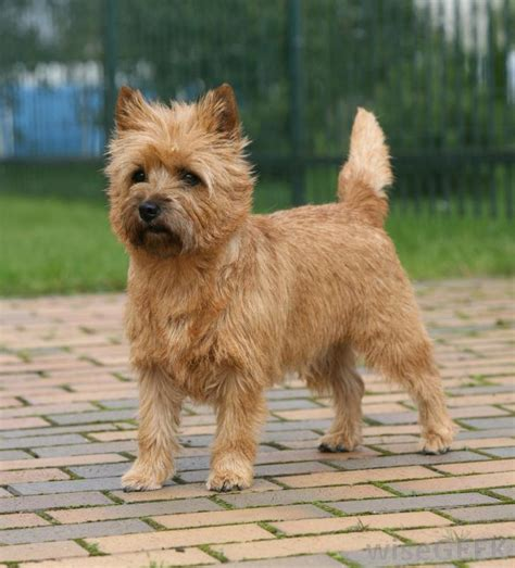 Do All Dogs Shed Hair by 187 Do You Know Your Pet Dog Breeds