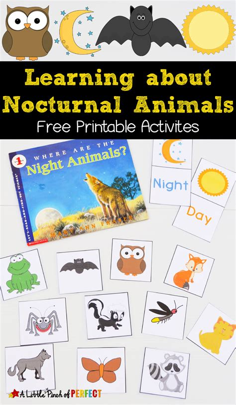 nocturnal animals printables  homeschool deals