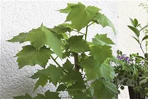 fruhjahrskur fur zimmerpflanzen energieleben With whirlpool garten mit beste erde für zimmerpflanzen