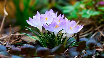 Nature Flowers Flower Laptop Natural Amazing