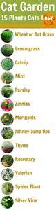 cat friendly plants diy dried up beds 8 see more ideas about plants