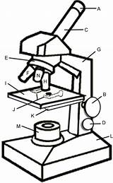 Microscope Coloring Slipping Prevent Stage Slide sketch template
