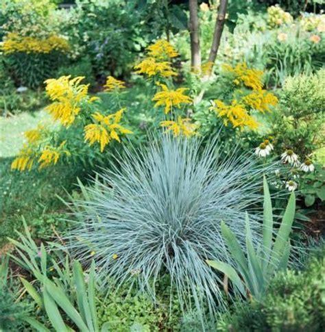 midwest gardens best ornamental grasses for midwest gardens gardens garden ideas and ornamental grasses