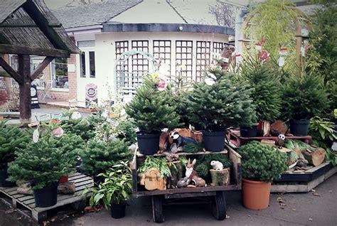 wwwhouston garden center xmas tree sale trees for sale valley garden centre