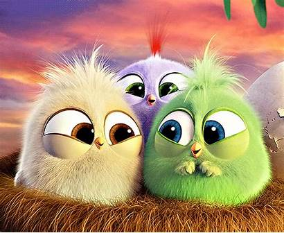 Angry Birds Giphy Gifs Adorable Hatchlings Animation