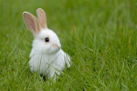 adopter un lapin une bonne id 233 e pratique fr