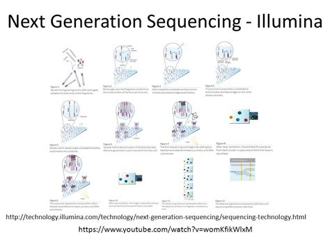 Next Sequencing Illumina Molecular Tools Ppt