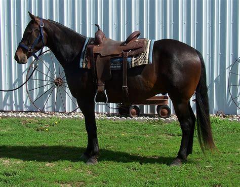 cutting bit bay quarter ig gelding aqha chance last horses