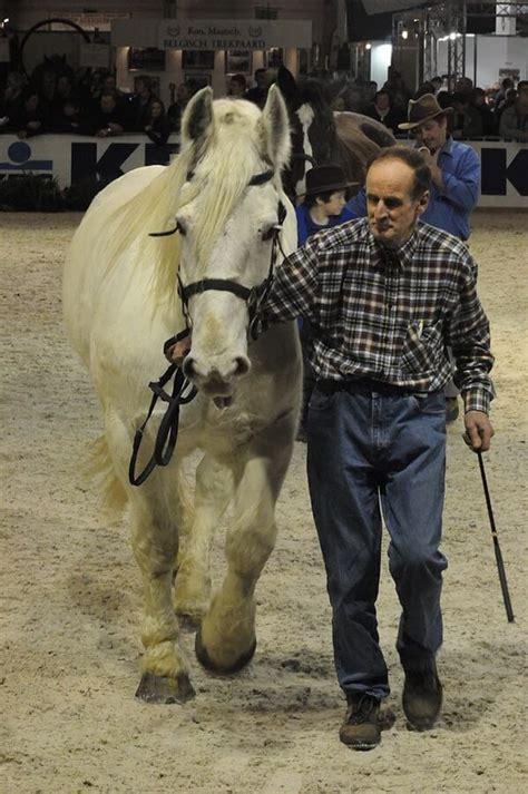 horse breeds france rare draft horses marble endangered ihearthorses animals