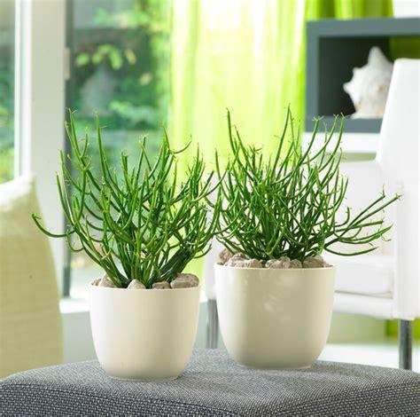 Zimmerpflanzen Wenig Wasser by Pflanzen Wenig Wasser Sukkulenten Vermehren Gie En Und