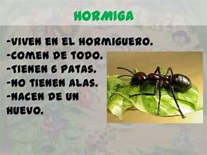 Información para niños sobre las hormigas Informacionde info
