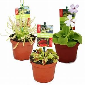 Fleischfressende Pflanze Pflege : starter set fleischfressende pflanzen 3 pflanzen ebay ~ A.2002-acura-tl-radio.info Haus und Dekorationen