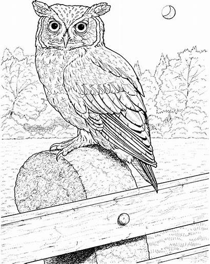 Owl Coloring Pages Animals Fence Wildlife
