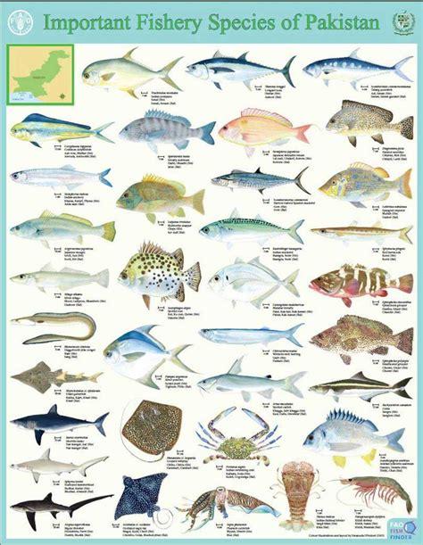 fao species identification tools  marine resources